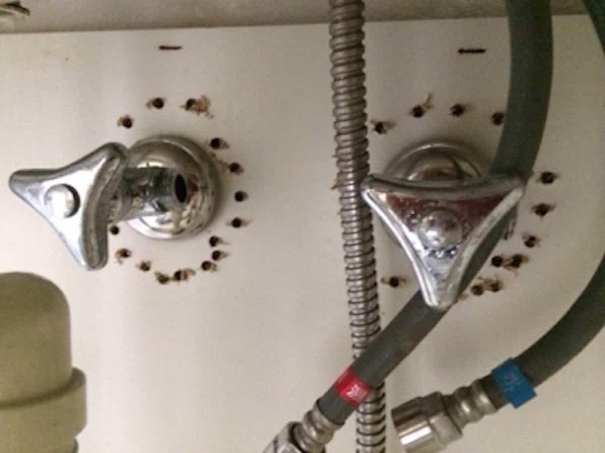 壁の給水栓まわりの板に穴あけする様子