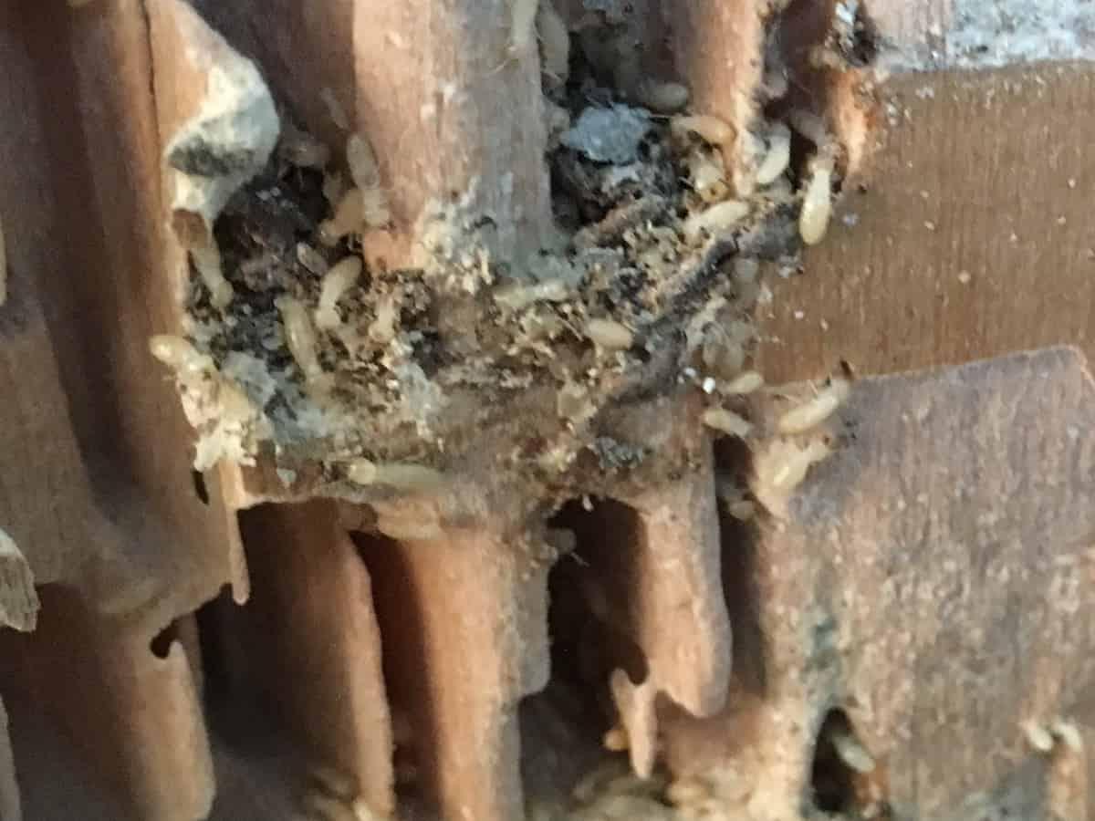現在進行系でシロアリが木材を食べている