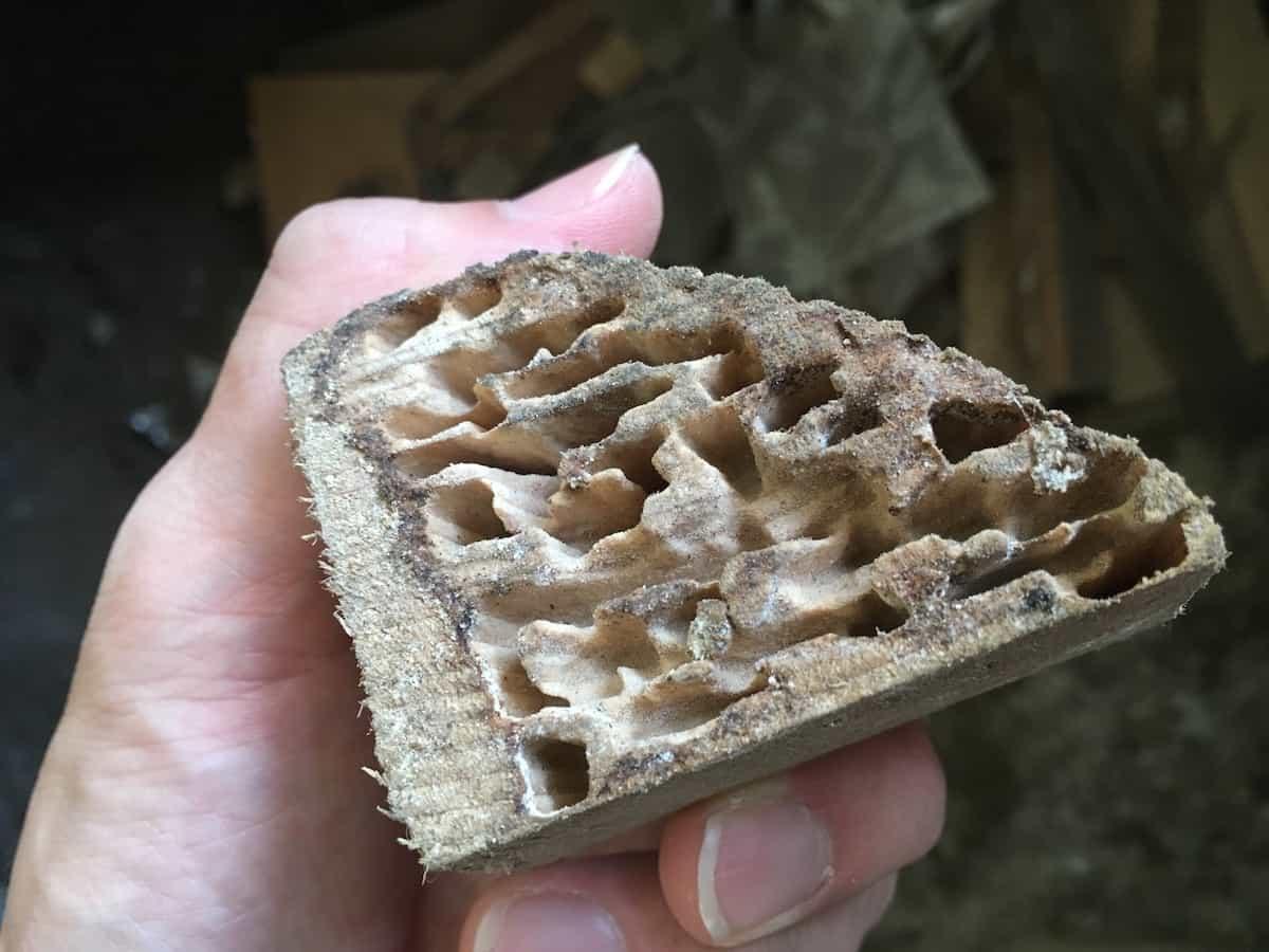 放置されていた木材にシロアリ被害を確認